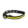 Glitter Bone LED Dog Collar