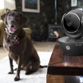 Motorola Scout 85 Connect Indoor Pet Monitor 3