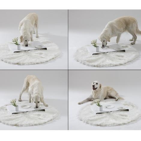 Room Service Dog Bowls & Tray 4