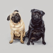 Paint My Dog  - Pug Pair Art Print