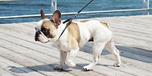 THE RIGHT LEAD, COLLAR AND HARNESS FOR YOUR DOG