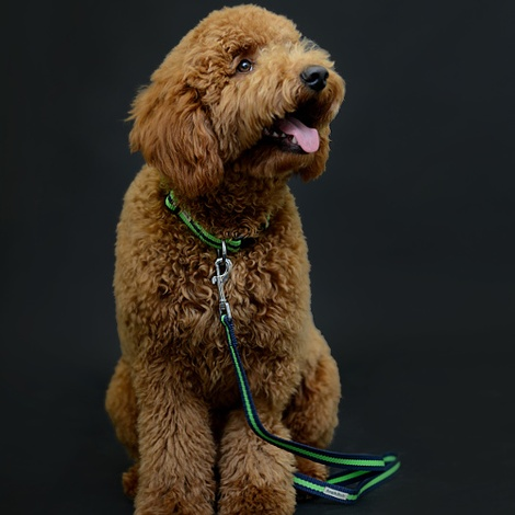 Green Dog Lead 4