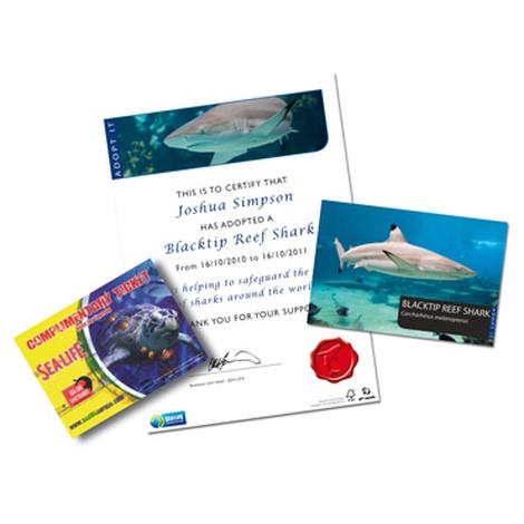 Adopt A Shark Gift Box 3