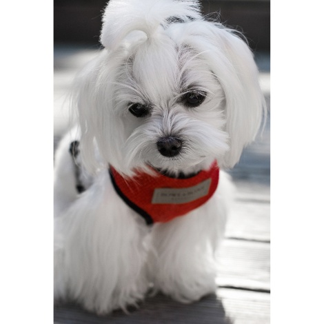 Candy Dog Harness - Red 5