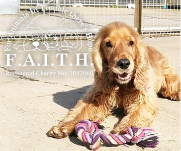 F.A.I.T.H Animal Rescue