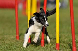 Dog Training in London