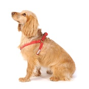 Doodlebone - Bold Dog Harness – Red
