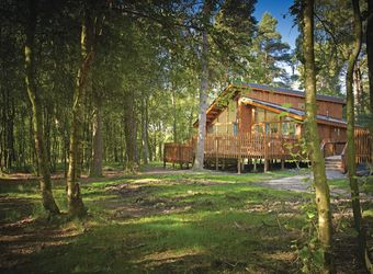 Silver Birch - Cropton Lodges