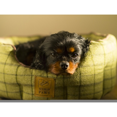 Tweed Oval Snuggle Dog Bed – Green 4