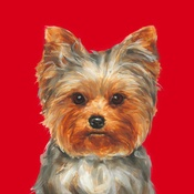 Paint My Dog  - Yorkshire Terrier Art Print