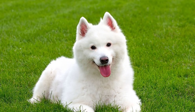 Top Dog Grooming 4