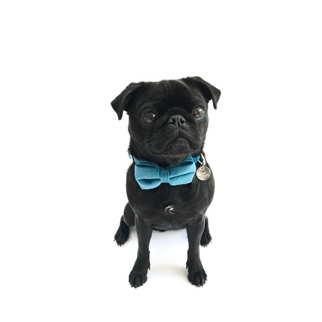 Collar and Bow Tie - Constantine