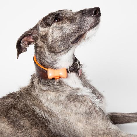 Wonderwoof Bow Tie Activity Tracker – Orange 8