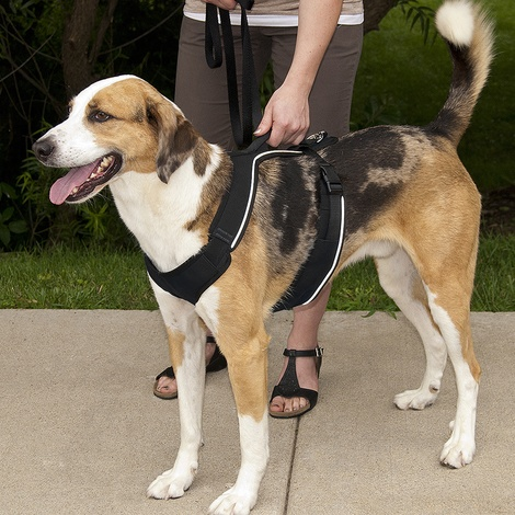 EasySport™ Dog Harness – Black 3