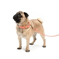 Coral Leather Dog Lead 3