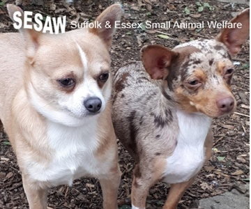 Sesaw Suffolk & Essex Small Animal Welfare