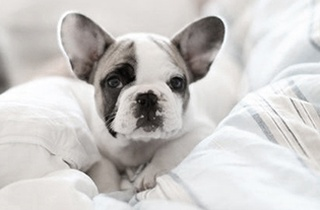 Top Training Tips for Your New Puppy