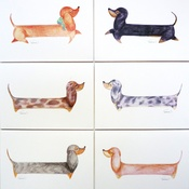 Dachshund Design  - Standard Daxy Pack of 6