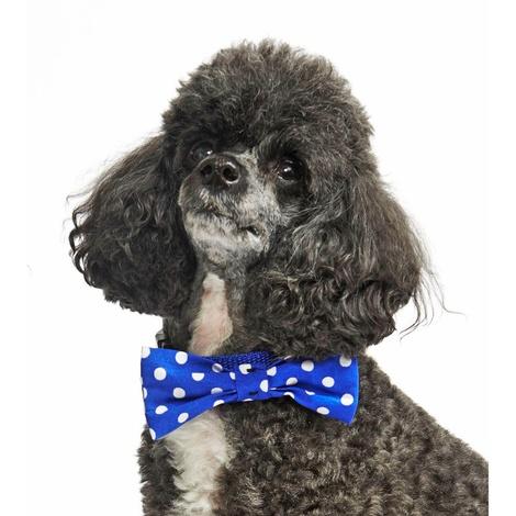 """Blue Polka Bowtie Dog Collar 1"""" Width 2"""