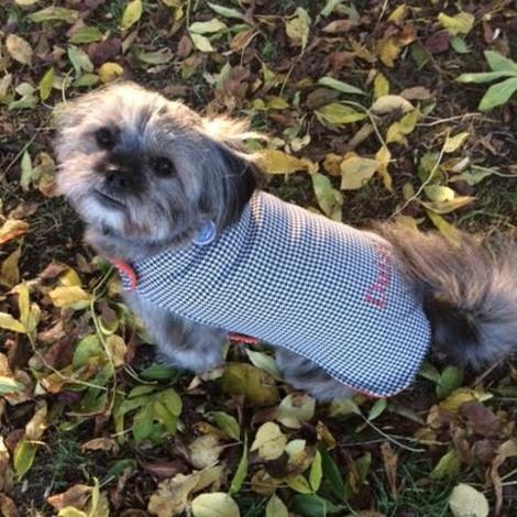 Personalised Houndstooth Dog Coat 4