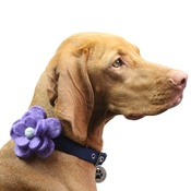 Love from Lola - Bloom Dog Collar Flower Accessory - Lavender & Duck Eg