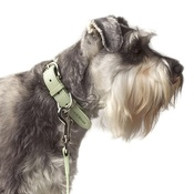 Mutts & Hounds - Sage Leather Dog Collar - Pastel Green