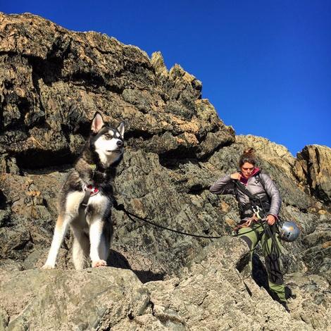 Doubleback Dog Harness – Cloudburst Gray 8