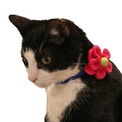 Love from Lola - Bloom Cat Collar Flower Accessory - Fuchsia & Lime