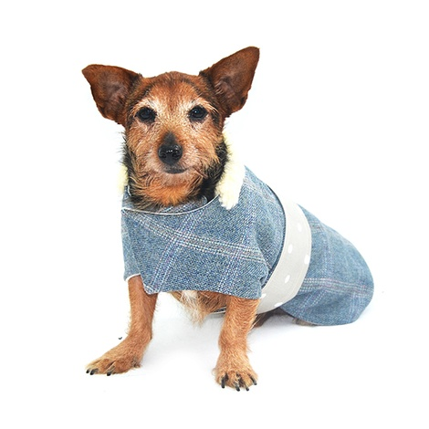 Polo Tweed Dog Coat