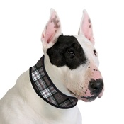Aqua - Dog Cooling Collar in Scottish Grey