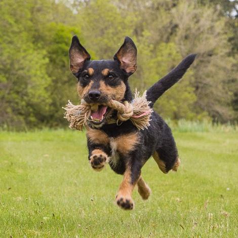 BecoRope Jungle Double Knot Dog Toy 4