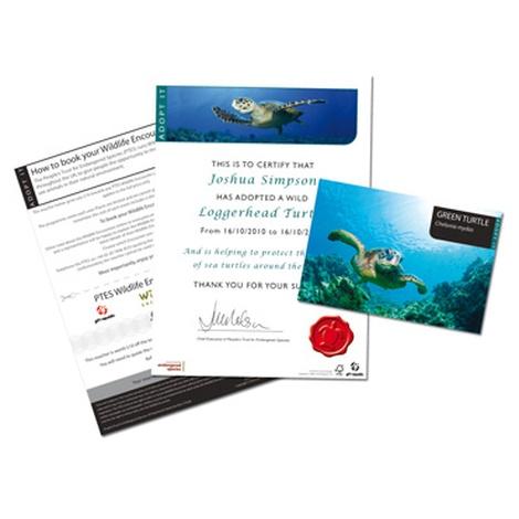 Adopt A Sea Turtle Gift Box 3