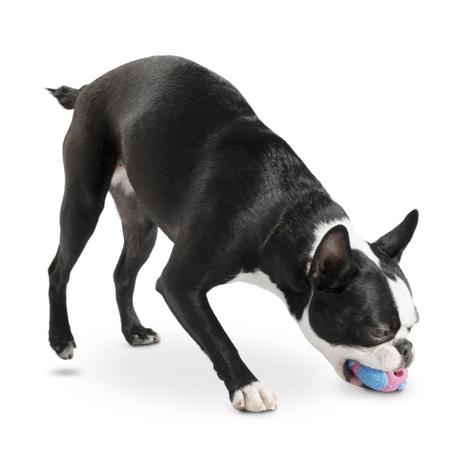 Orbee Tuff Orbee Ball - Pink/Blue 4
