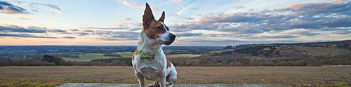 Dog-friendly Hampshire
