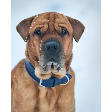 Leather dog collar (Rimini) - Midnight Blue 6