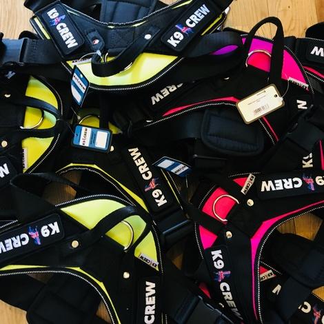 K9 CREW Neon Harness 4
