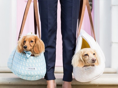 Our Top 10 Pet Travel Essentials