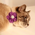 Bloom Cat Collar Flower Accessory - Lavender & Duck Eg 3