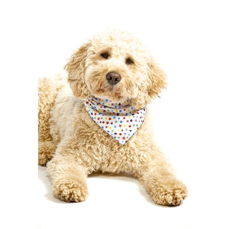 Multi Stars Dog Bandana 2