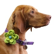 Love from Lola - Bloom Dog Collar Flower Accessory - Lime & Aqua