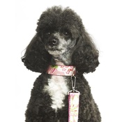"Pet Pooch Boutique - Lily Dog Lead 1"" Width"