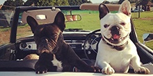 ANNOUSHKA DUCAS AND HER GORGEOUS FRENCHIES
