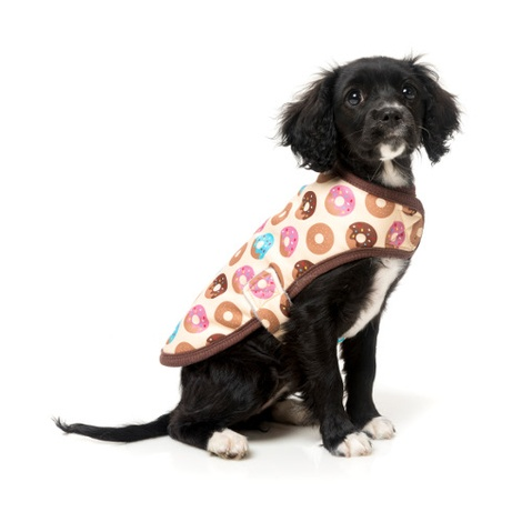 Go Nuts Wrap Dog Coat
