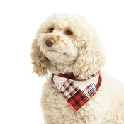 Pet Pooch Boutique - Patchwork Pete Dog Bandana