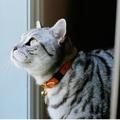 Leather Orange Cat Collar 4
