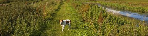 Dog-friendly Cumbria
