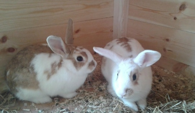 Ingleby Bunny & Guinea Pig Boarding