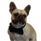 Dapper Pets - Black Velvet Dog Bow Tie