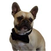 Dapper Pets - Black Velvet Dog Bow Tie