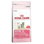 Royal Canin - Kitten 36 Cat Food